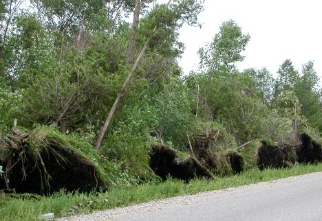 fergus-Sideroad-15-tornado-damage