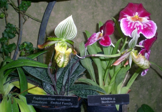 Orchids at Longwood Gardens conservatory