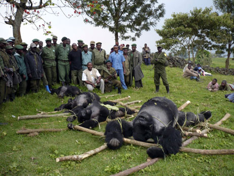 gorillas killed at Virunga, July 2007