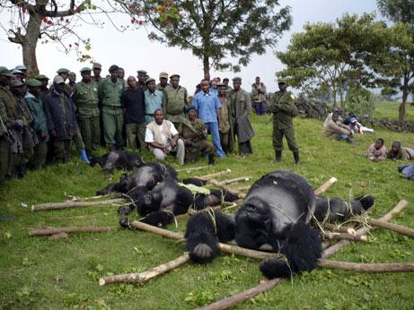 gorillas killed at Virunga, July2007