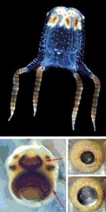 Jellyfisheyes