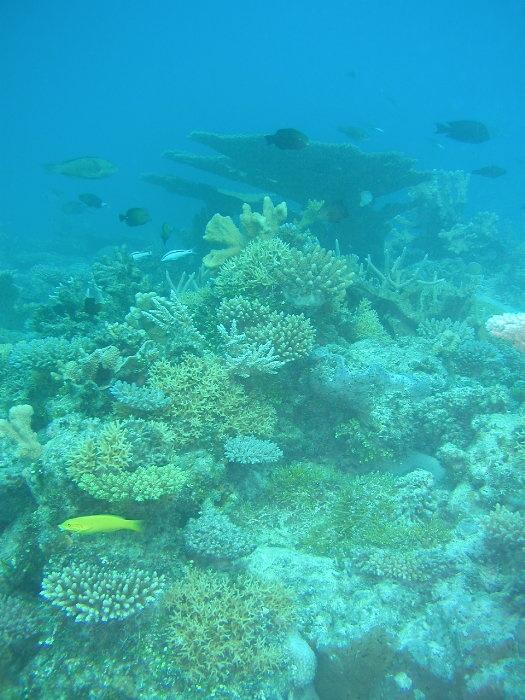 lagoon corals at Bikini, former nuclear test site