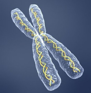 segment of DNA molecule, double helix, in chromosome