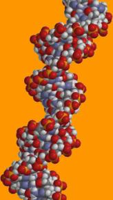 segment of DNA molecule, double helix