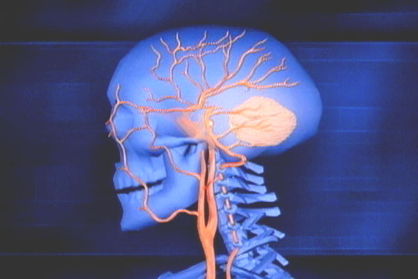 nerves and blood vessels in head and neck