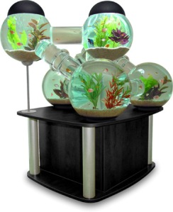 fish tank with modules
