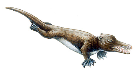 Ambulocetus, a pre-whale, discovered in 1992; image by Shawn Gould