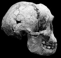Homo floresiensis « Science Notes