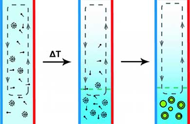 Formation of Protocell-like Vesicles in a Thermal Diffusion Column