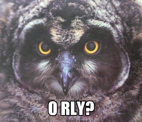 grey-owl-ORLY