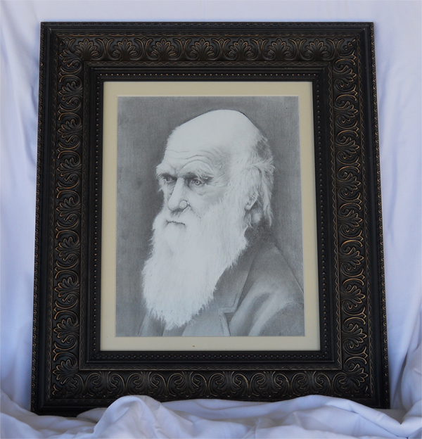 framed drawing of Charles Darwin as an old man with a long, white beard