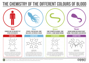 The-Chemistry-of-Blood-Colours-v2-500x353