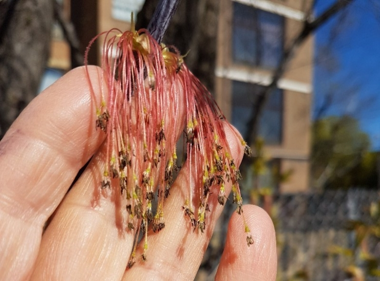 Fingers holding tiny flowers with red stems